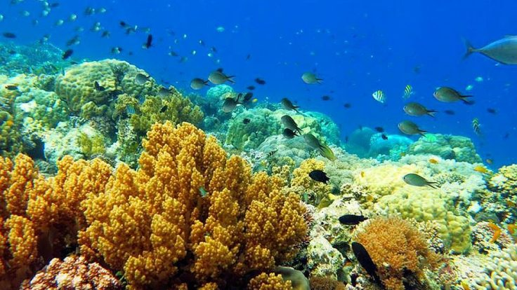 linaw-Beach-Resort-scuba-diving-in-Bohol-003-1024x576